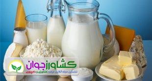 خرید شیر خام زیر قیمت مصوب اوضاع دامداران را وخیم کرد