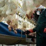 تبکردن صنعت مرغداری بر اثر آنفلوآنزا