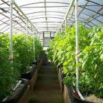 توسعه کشاورزی شهری با محور گلخانه های کوچک