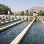 ممنوعیت پرورش آبزیان در خوزستان و ابهام در وضعیت ۱۴ هزار شاغل در این بخش
