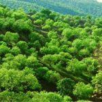 توسعه و صیانت از جنگل ها نیازمند مشارکت همگانی است