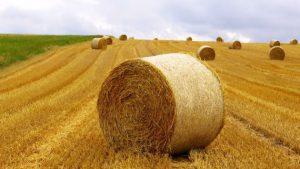 کشاورزی آلمان