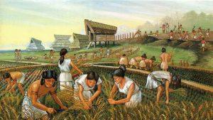 تاریخچه کشاورزی